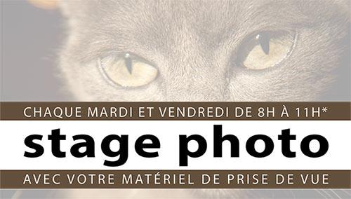AfficheStagePhotoTop